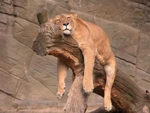 dormire-comodi