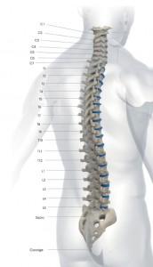 schema-colonna-vertebrale